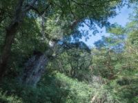 縄文杉を見に行く