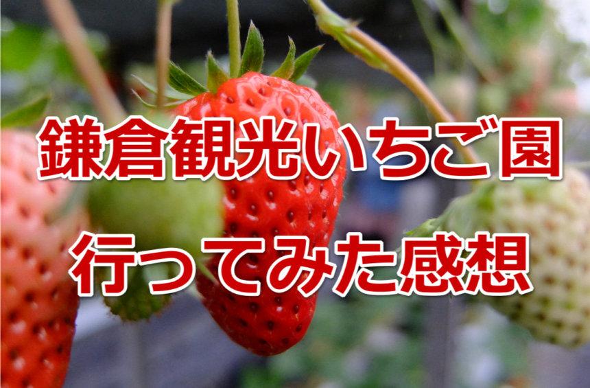 鎌倉観光いちご園に行ってみた感想・口コミ評価について