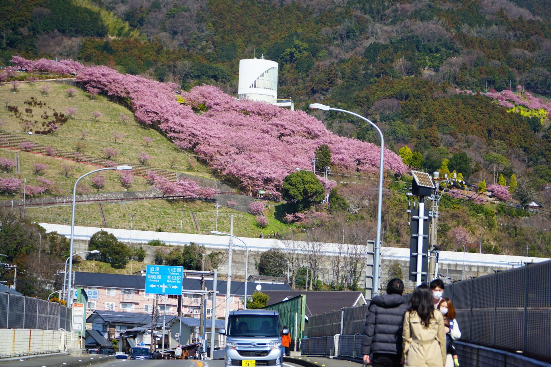まつだ桜まつりの入り口