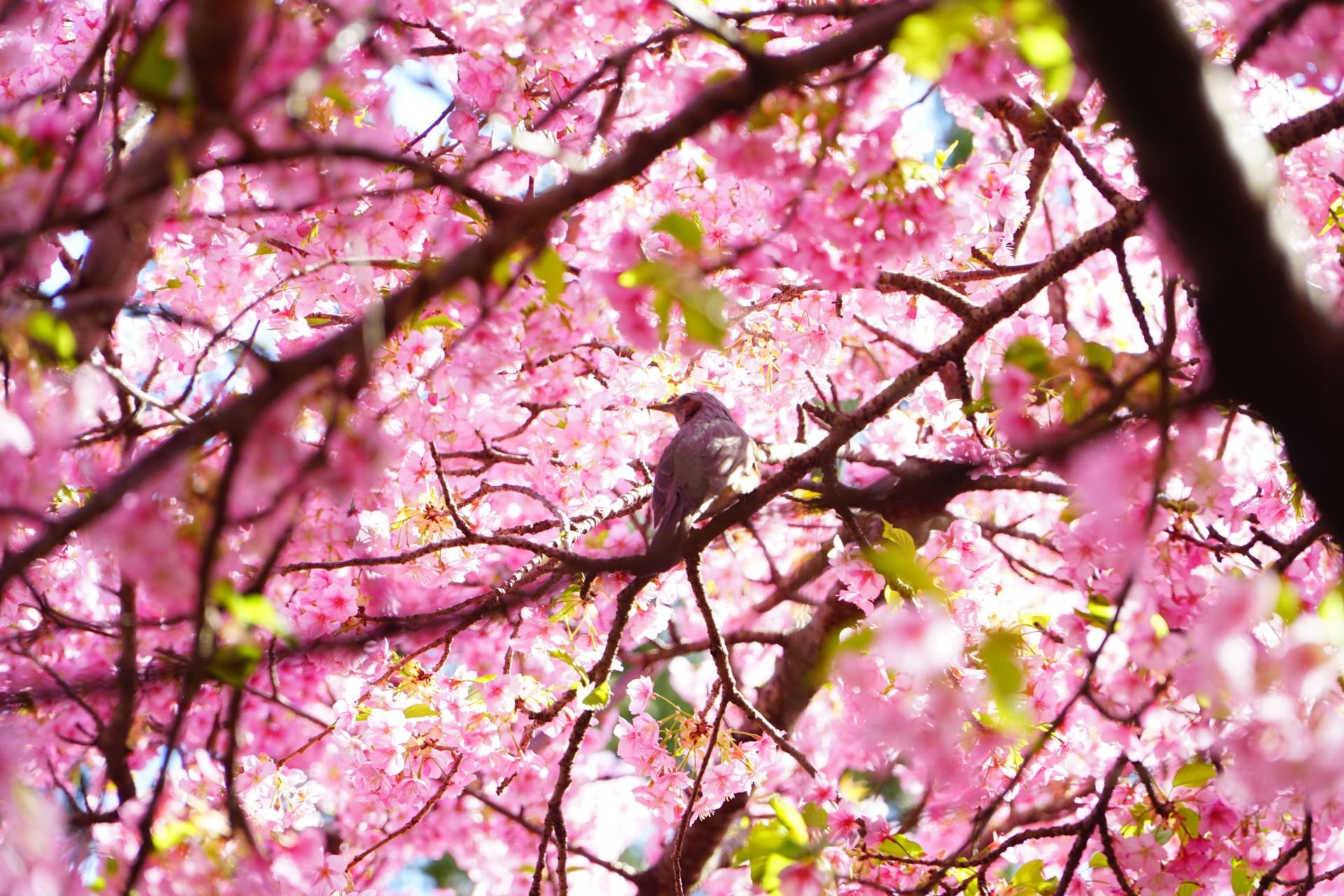葉桜と小鳥