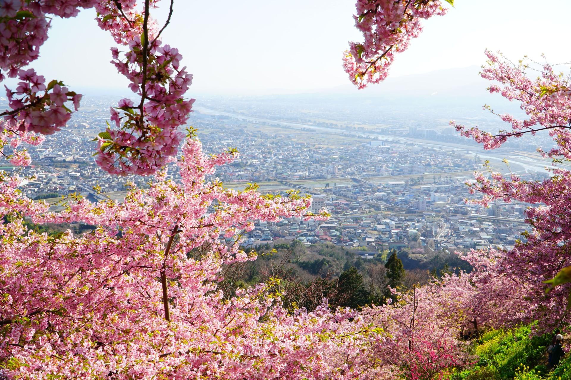 あぐりパーク嵯峨山苑からの絶景