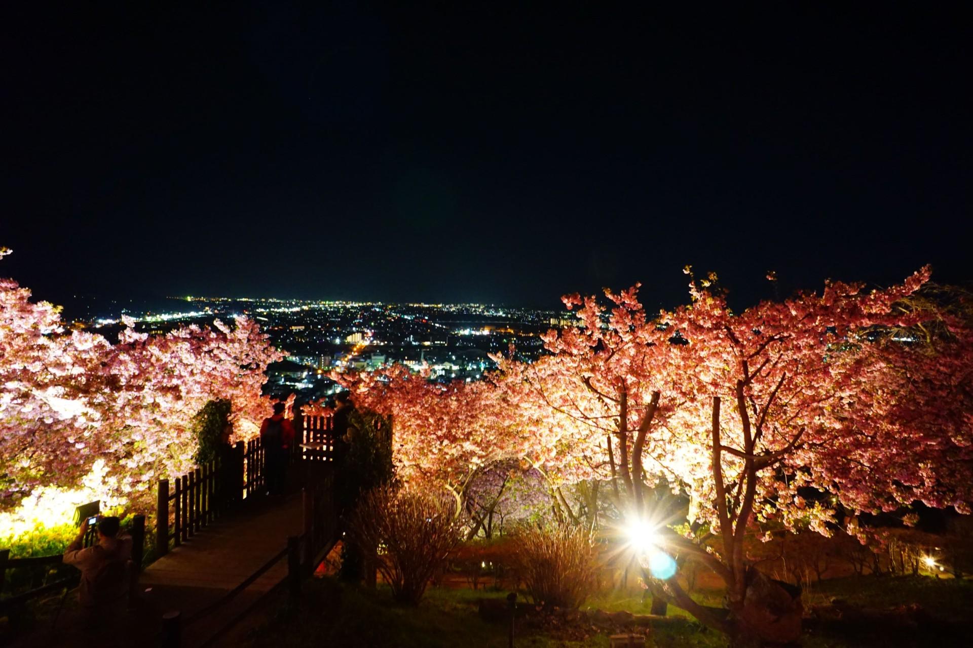 まつだ桜まつりのライトアップ